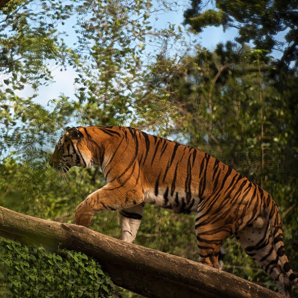 Tierpark Stadt Haag 3